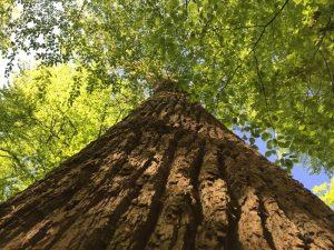 Durf jij te groeien met de natuur als raadgever?