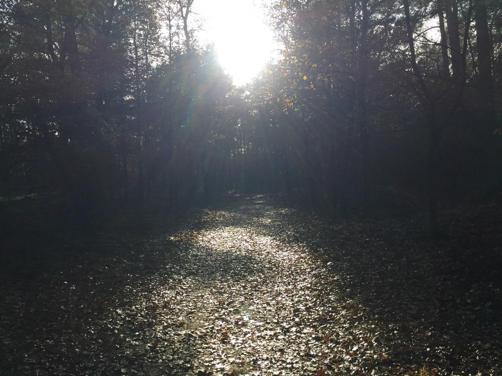 De Natuur: van vluchtoord tot inspiratiebron
