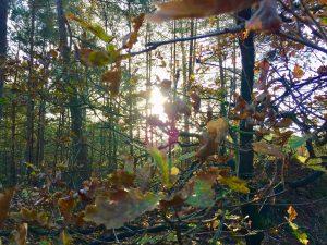 De natuur: van vluchtoord naar inspiratiebron
